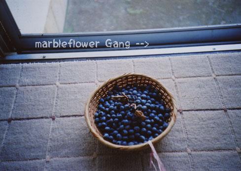 blueberry001.jpg